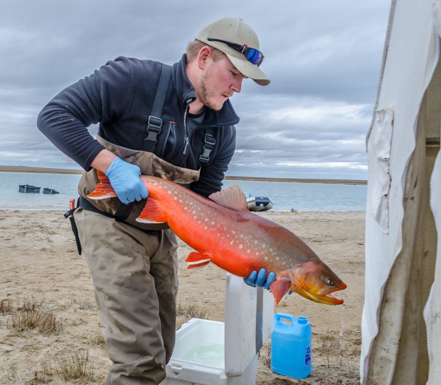 Tracking Arctic Char and Lake Trout in the High Arctic